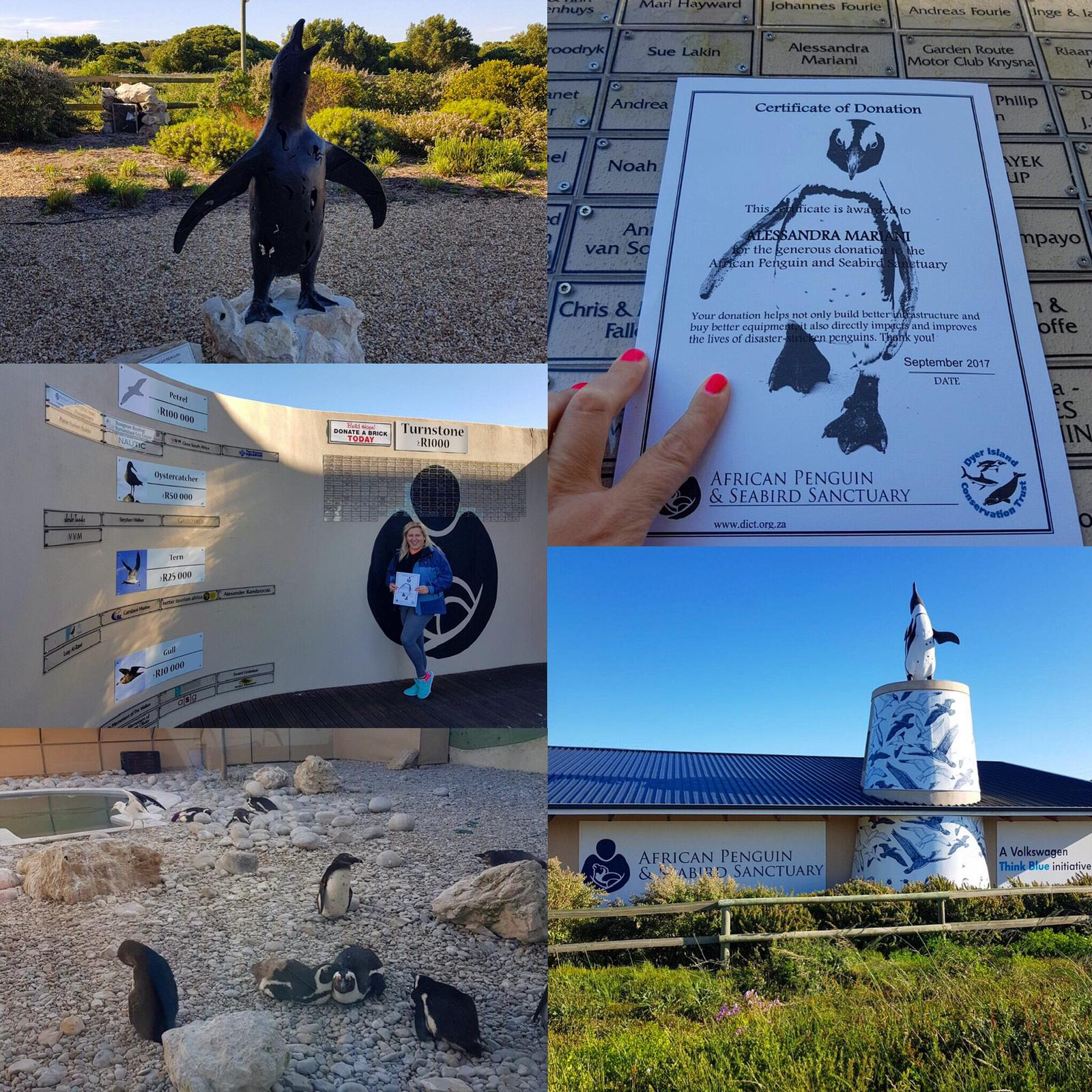 Alla ricerca di balene, foche, pinguini e squali bianchi