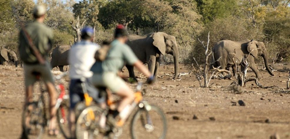 Safari alternativi